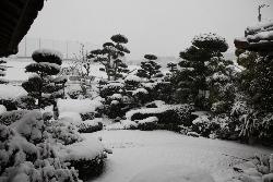 ゆうわ-庭園冬