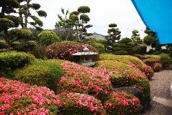 ゆうわ-庭園夏